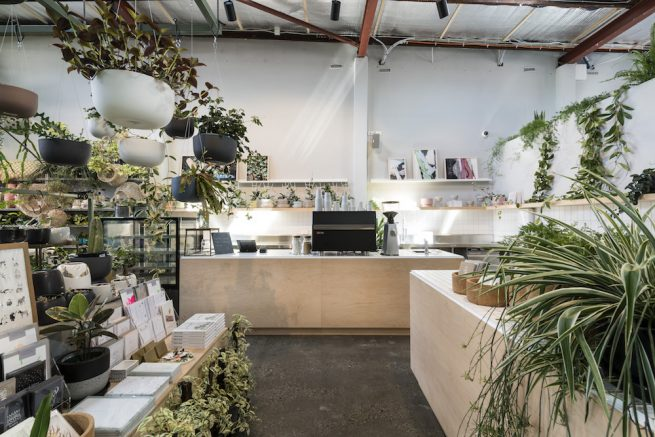 rare indoor plants - homewares - cafe    perth
